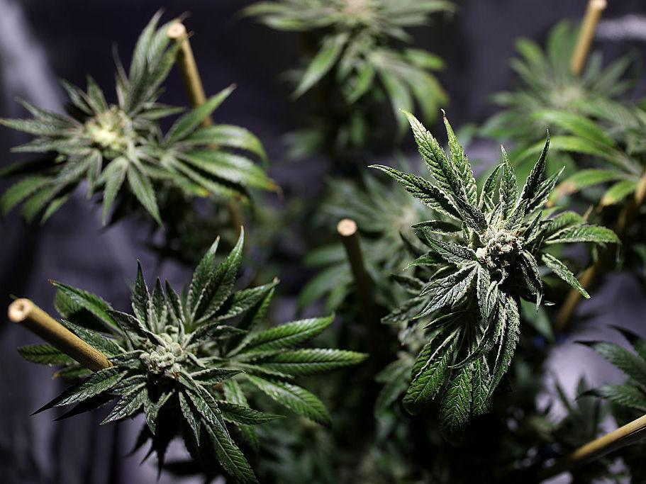 utilitarian s view on legalizing marijuana Smoking gun: the moral and legal struggle for medical marijuana daniel j pfeifer i introduction in the debate over medical marijuana, the.