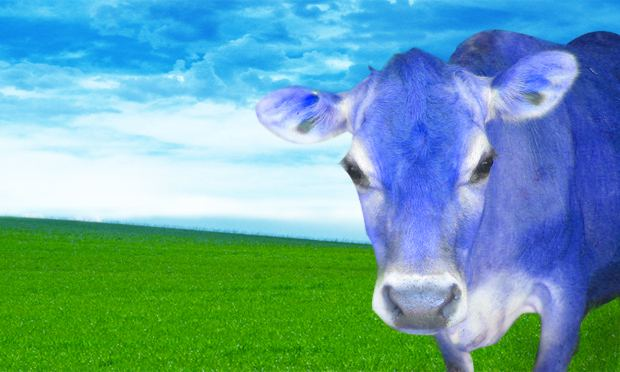 Blue cow print background - photo#4