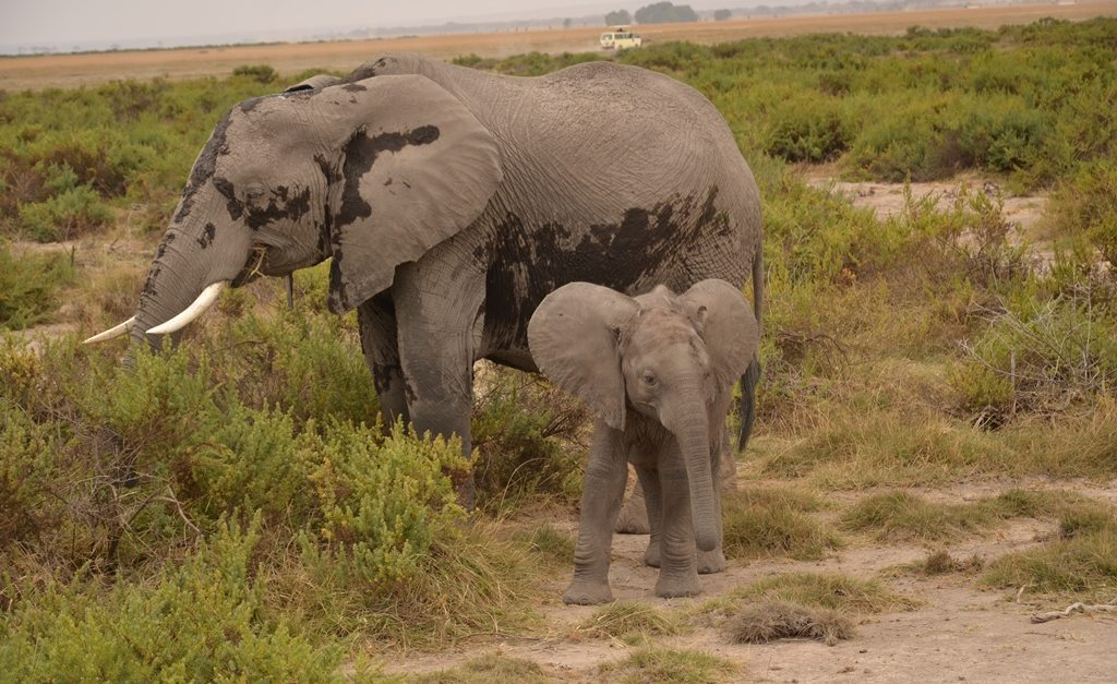 the issue of elephant poaching Social issue: poaching grace masback on to aid elephants  design class has taken on the task of creating visuals to confront social issues like poaching.