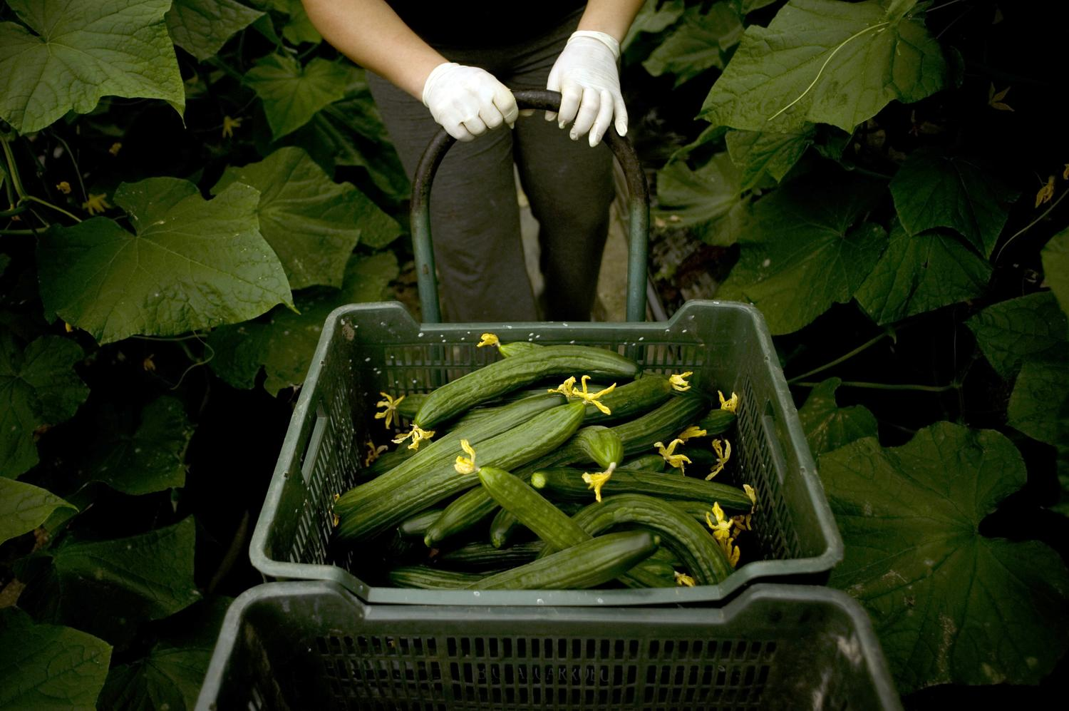 Obama Proposes Radical Overhaul of Nation's Food Safety Operations | The Takeaway | WNYC