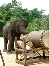 elephant, drum