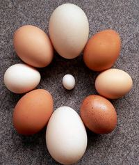 Eggs of different sizes