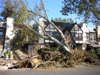A fallen tree in Forest Hills, Queens remains as the city continues the clean-up from last week's storm.