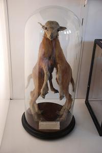Hunterian Collection specimen