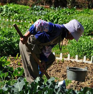 A farm worker