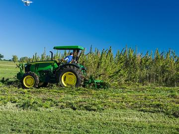 a tractor harvests a hemp field