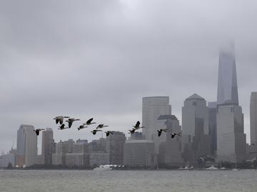 A flock of birds takes flight over the Hudson River with the Lower Manhattan skyline partially visible because of fog seen from Liberty State Park, Sunday, July 22, 2018, in Jersey City, N.J.