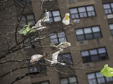 In this March 27, 2019 file photo, plastic bags are tangled in the branches of a tree in New York City's East Village neighborhood.
