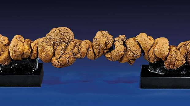 A detail of the coprolite.