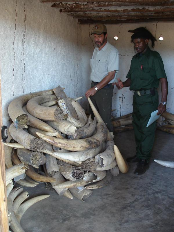 Richard Ruggiero, at an ivory storage room in Niassa Reserve in
