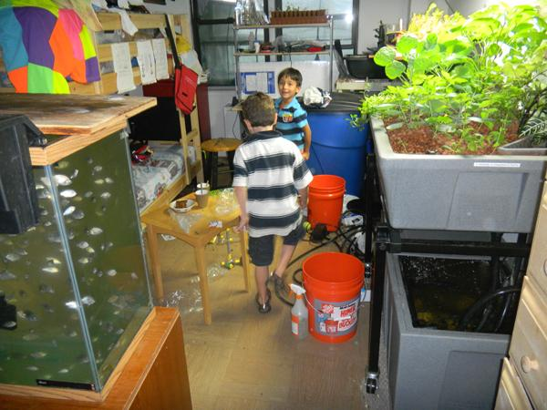 Two of Christopher Toole and Anya Pozdeeva's sons explore the aquaponic setup at The Point.