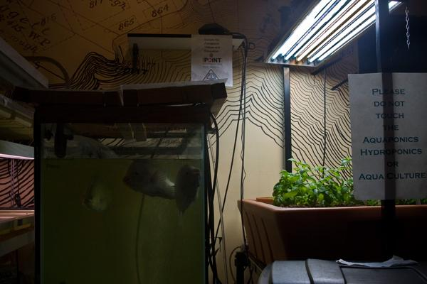 Aquaponics at The Point.