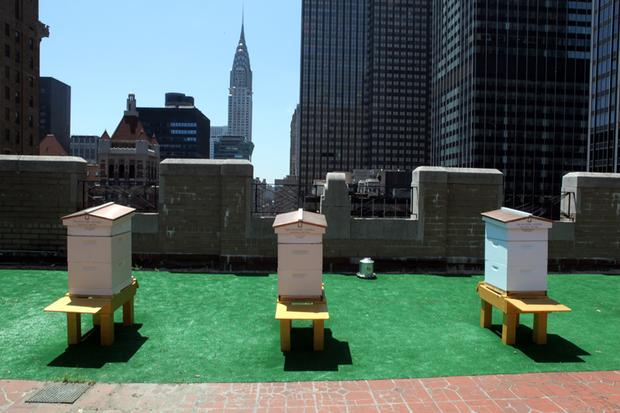 Bee hives on the roof of the Waldorf-Astoria hotel.