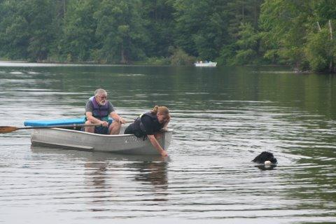 Clancy the Newfoundland during a water trial.