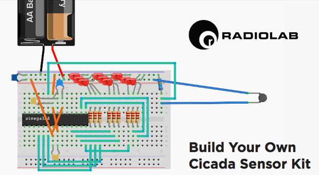 Cicada kit diagram