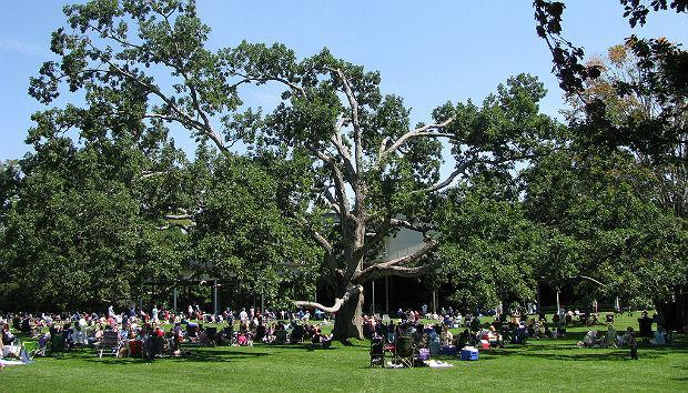 Tanglewood Festival