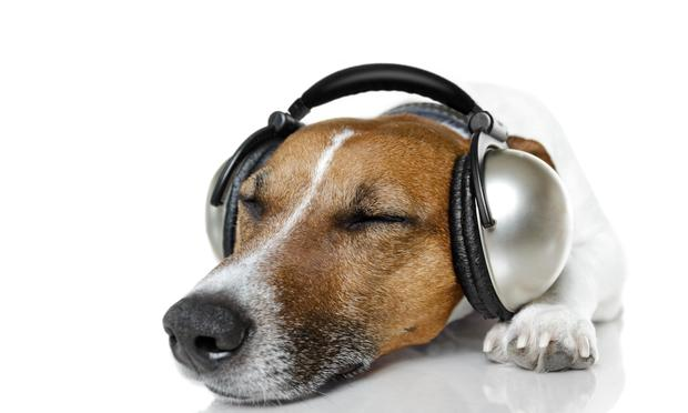 What kind of music would be relaxing enough to put him to sleep? Three Dog Night? Dr. Dog? Dogbreth?