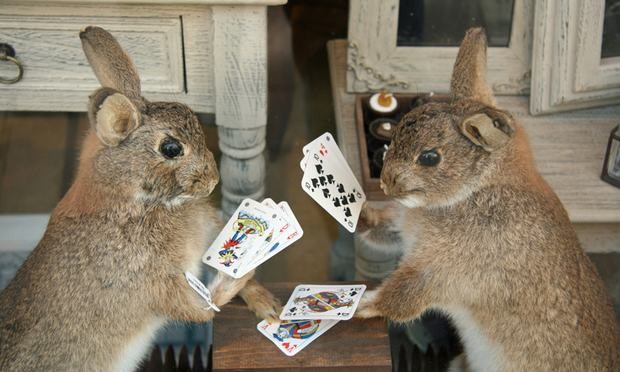 rabbits playing poker