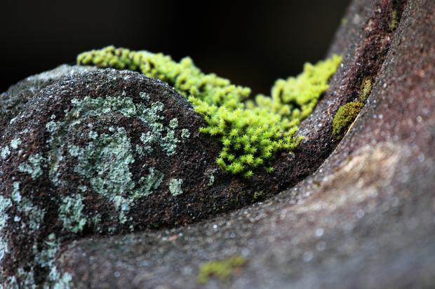 Moss in Japan.