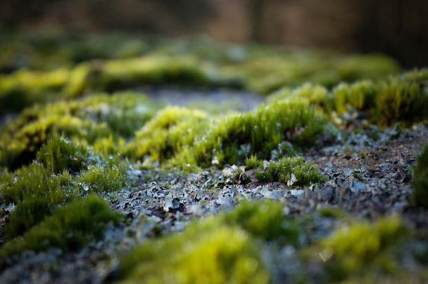 Moss up-close.