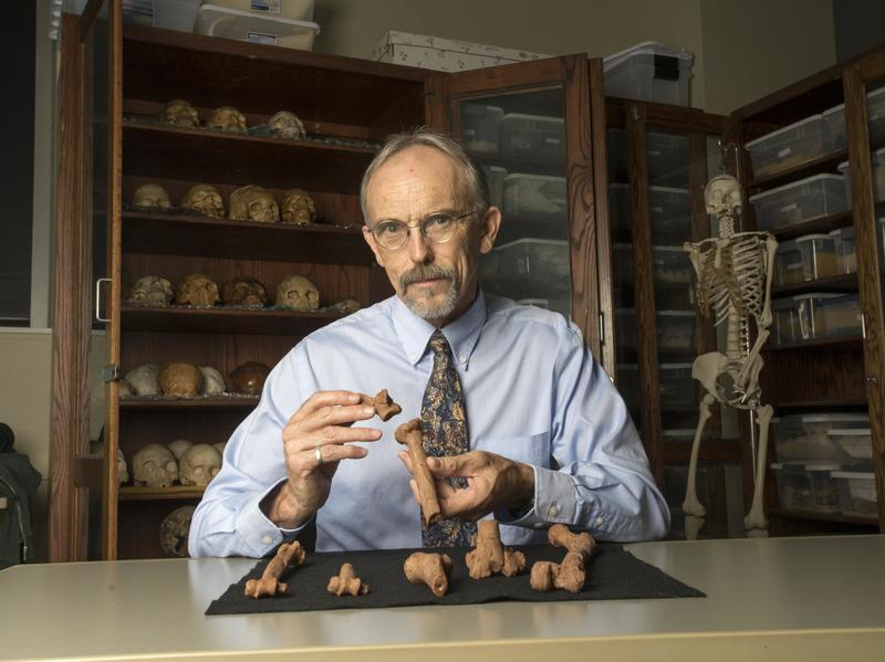 Professor John Kappelman with 3-D printed replications of Lucy's bones.