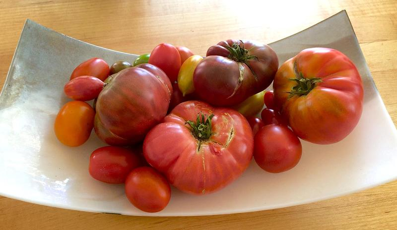 Fresh tomatoes from Kathy's garden. (Kathy Gunst for Here & Now)