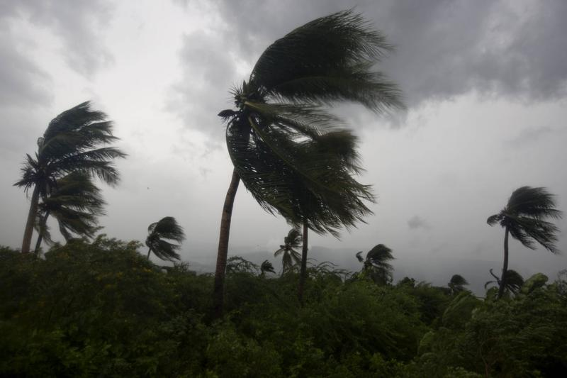 Wind blows coconut trees during the passage of Hurricane Matthew in Port-au-Prince, Haiti, Tuesday, Oct. 4, 2016. (Dieu Nalio Chery/AP)