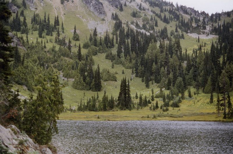 This undated photo provided by the U.S. Forest Service shows yellow cedar trees growing along Sheep Lake east of the Cascade crest in Washington state. (U.S. Forest Service via AP)