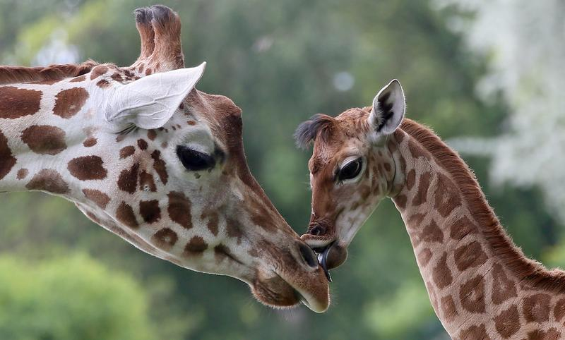 Unpopular Opinion: Zoos Can Help Animals and Communities