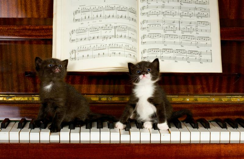 Cats on a keyboard