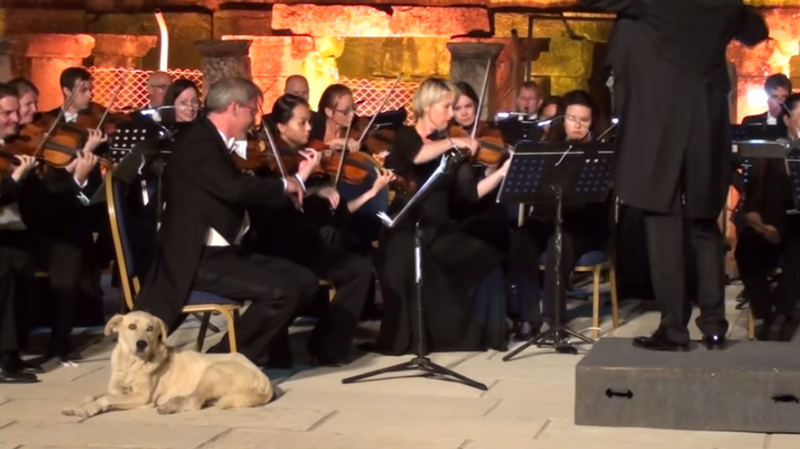 A dog wandered into a performance by the Vienna Chamber Orchestra.