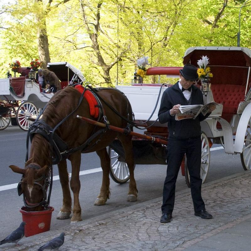A horse and carriage driver wait for a client at 59th St. and Fifth Avenue.