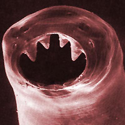 a radiolab paraziták összefoglalása