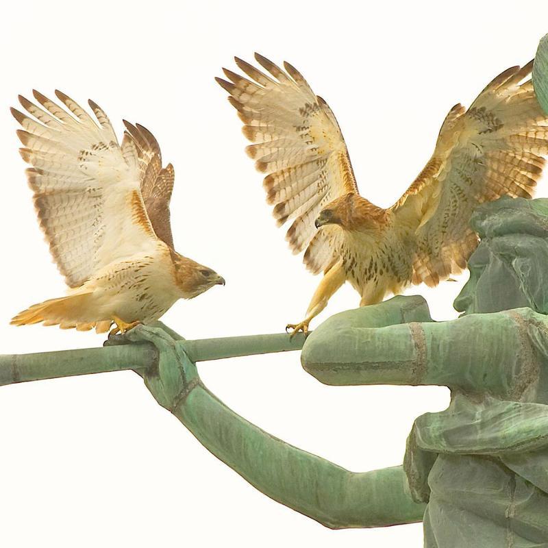 The Birds Of New York City The Leonard Lopate Show Wnyc