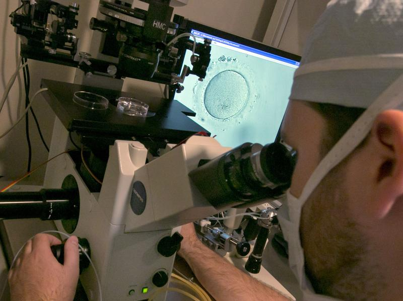 A fertility doctor looking at an embryo through a microscope.
