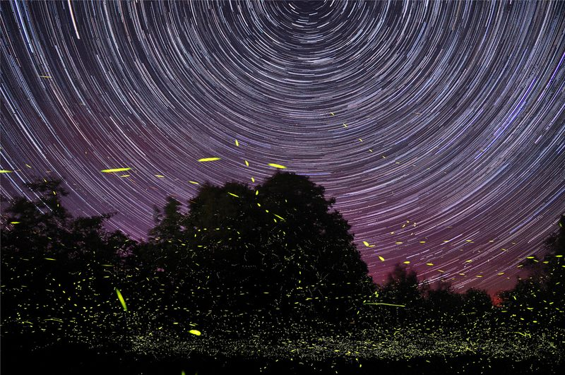 Fireflies and Star Trails No. 2