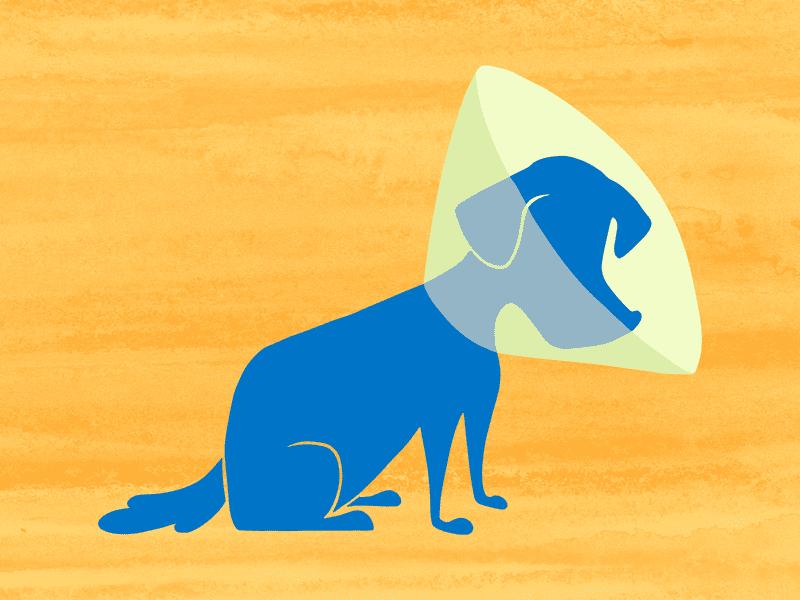 cone of shame this podcast has fleas wnyc studios