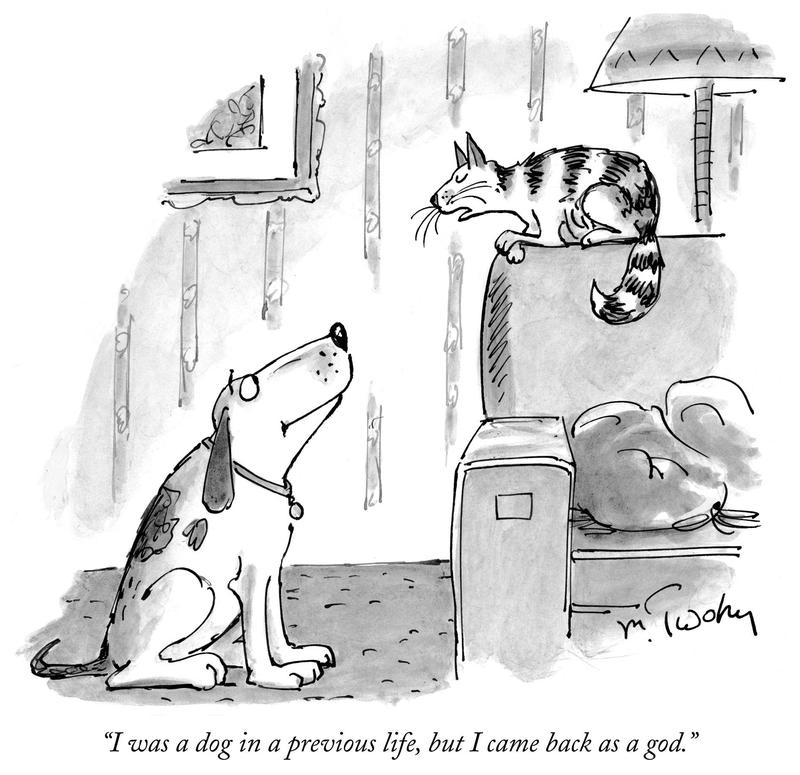 cats vs dogs at the new yorker festival wnyc news wnyc