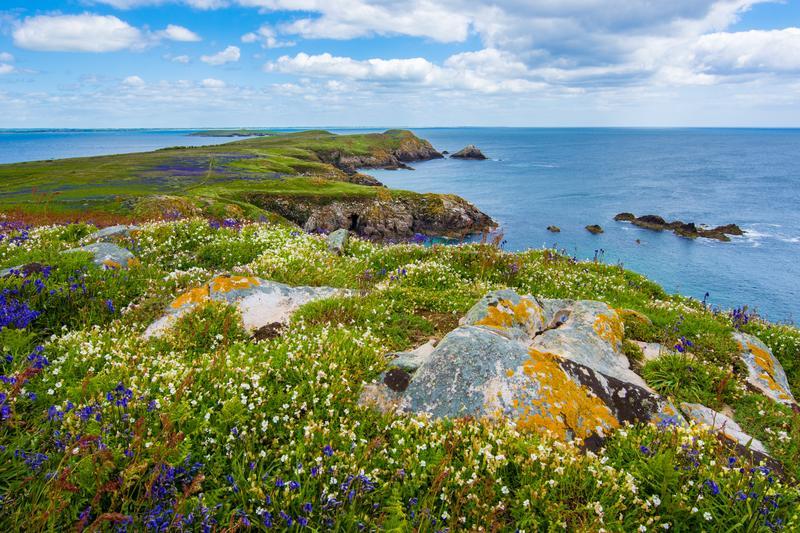Saltee Island Great, Ireland.