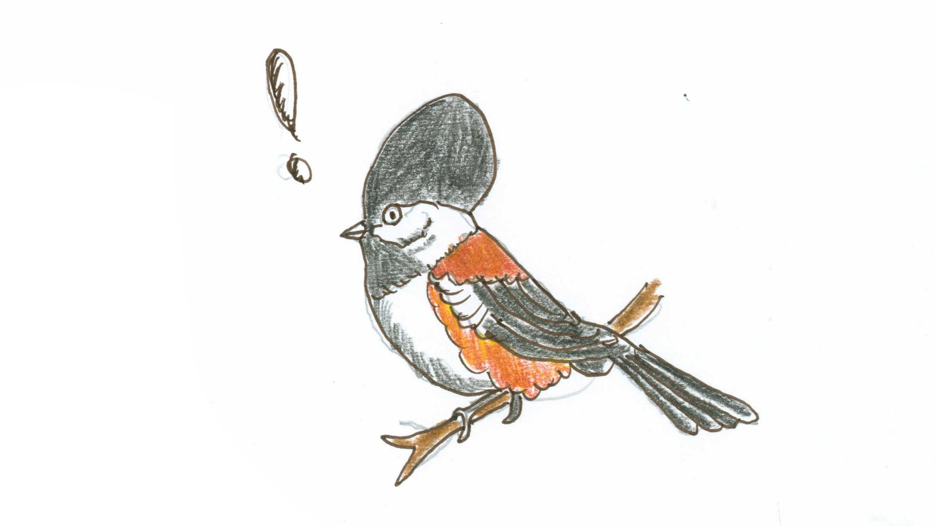 Every fall, the part of the chickadees brain responsible for remembering where things are expands in volume by approximately 30 percent.