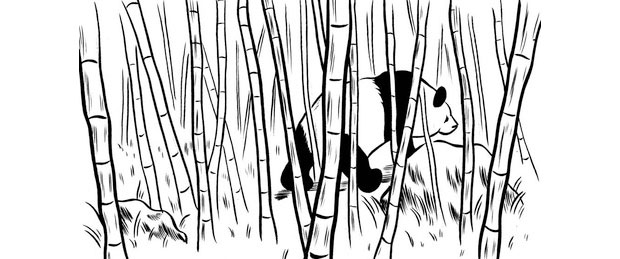 Panda in a bamboo forrest