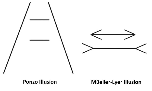 The Ponzo Illusion and the Mueller-Lyer Illusion