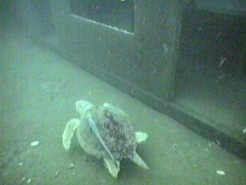 Sea Turtle on the 7